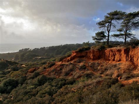 torrey pines state natural reserve hiking rootsrated