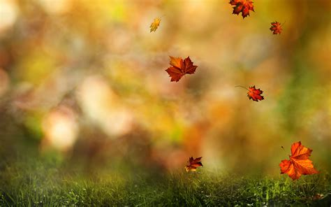 Animated Falling Leaves Wallpaper - fall wallpaper forest hd desktop wallpapers 4k hd