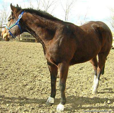 signs  copper deficiency  horses