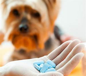qa safe alternatives to asprin ibuprofen naproxen or acetaminophen for dogs and cats