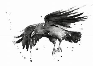 Flying Raven Watercolor Painting by Olga Shvartsur
