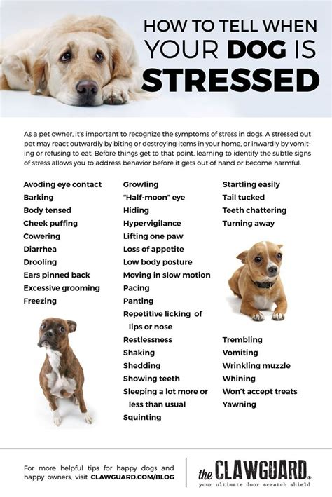 dog stressed dog anxiety  behavior dog