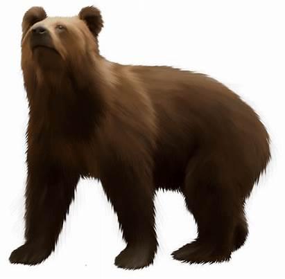 Bear Brown Clip Clipart Transparent Webstockreview Animals