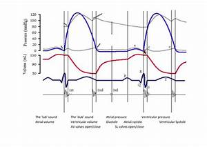 Label Cardiac Cycle Graph