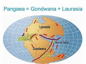 Laurasia Images - Reverse Search