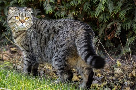 Tips Menjaga Kandungan 4 Bulan Cara Cepat Menggemukkan Kucing Meowmagz