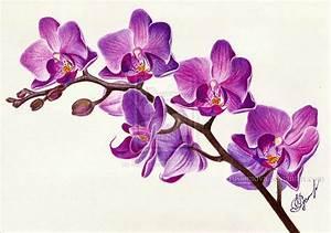 Purple orchid by Rustamova.deviantart.com on @deviantART ...