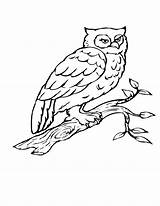 Coloring Bird Pages Owl Tree Birds Branch Drawing Flying Birch Printable Getdrawings Heart Getcolorings Popular sketch template