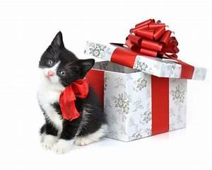 Cute Christmas Pics | New Calendar Template Site