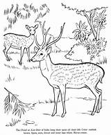 Animal Drawing Deer Coloring Pages Drawings Animals Jungle Printable Wild Honkingdonkey Draw Scene Hunting Coloringpages101 Activity Different Realistic Colouring Wildlife sketch template