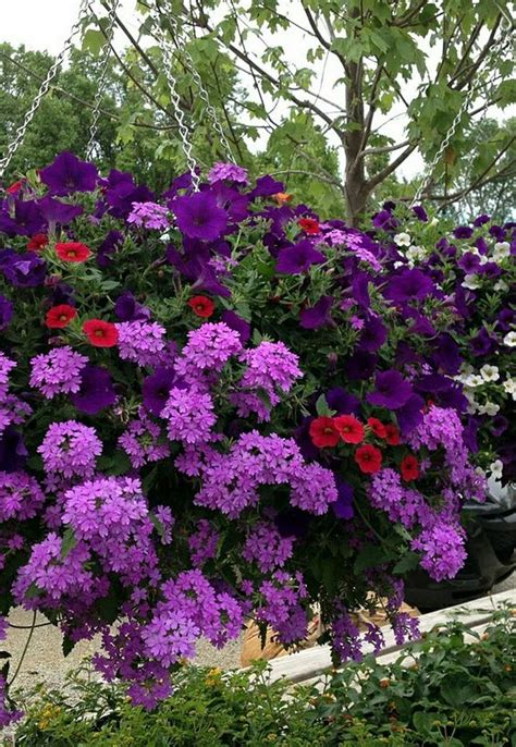 purple hanging plant baskets flower and purple flowers on pinterest