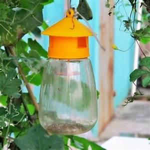 Plante Repulsif Mouche : mouche des fruits promotion achetez des mouche des fruits promotionnels sur ~ Melissatoandfro.com Idées de Décoration