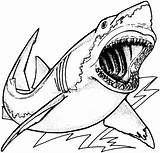 Shark Coloring Pages Jaws Animals Wildlife Sea Drawing Animal sketch template