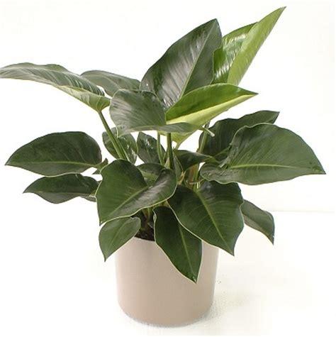 low light house plants low light house plants