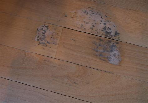 Shaw Laminate Flooring Problems by Hardwood Floor Problems Photo
