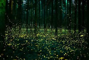 Magical Photographs Of Fireflies From Japan U2019s 2016 Summer