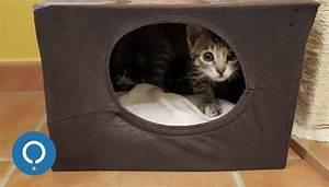 Maison Pour Chat Extérieur : ides de piege a chat a fabriquer galerie dimages ~ Premium-room.com Idées de Décoration