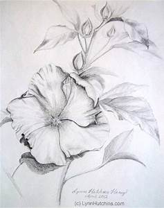 Hibiscus Original Pencil Drawing Flower Floral Still Life ...