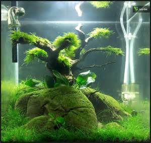 Planted Tank Carpet by Nano Aquascapes Aquascaping Aquarium