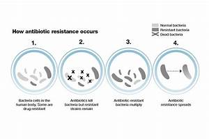Antimicrobial Resistance  Amr   Applying All Our Health
