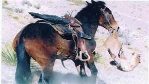 Mule Vs  Mountain Lion
