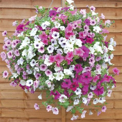 best flowers to plant best flowers for hanging baskets flowers flower plants annual plants lucky dip basket