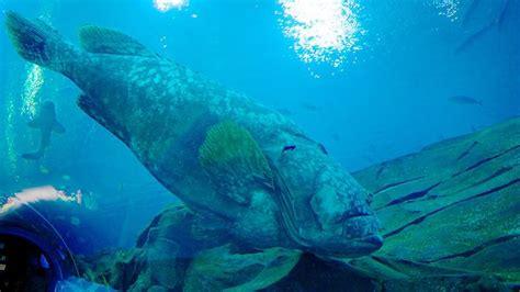 visit georgia aquarium  atlanta expedia