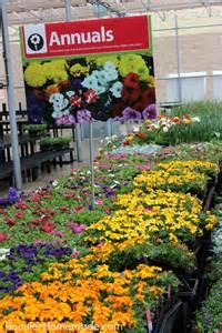 Walmart Garden Center Flowers