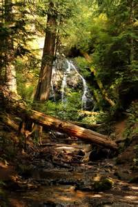 Forest Waterfall California