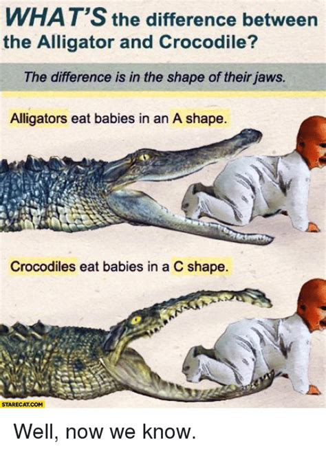 what is the difference between a and a sofa what s the difference between the alligator and crocodile