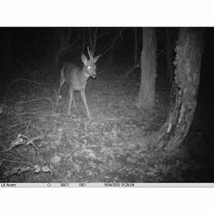 Camera Surveillance Infrarouge Vision Nocturne : camera piege photo ~ Melissatoandfro.com Idées de Décoration
