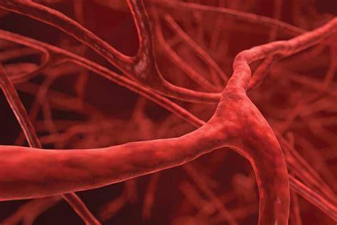 arterias cerebrales anatomia funciones media posterior