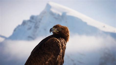 Planet Earth Animals Wallpaper - one planet earth ii mountains