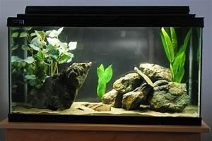 Aquarium Einrichten Anfänger : aquarium einrichtung sorgt f r das wohlf hlen der ~ Lizthompson.info Haus und Dekorationen