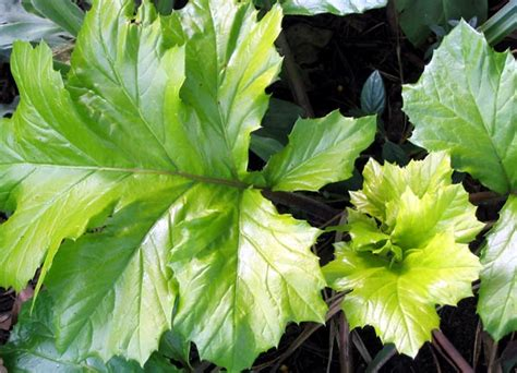 green foliage outdoor plants foliage plants