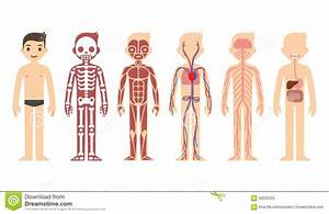 Image Result For Kids Anatomy Chart