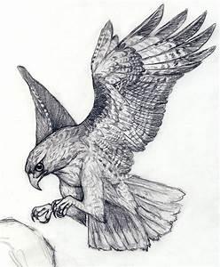 Hawk by silvercrossfox on DeviantArt