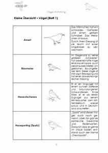 Vögel Im Winter Kindergarten : v gel im fr hling nahrung und brutaufzucht download criavis verlag ~ Whattoseeinmadrid.com Haus und Dekorationen