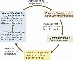 Diagram Of Body Temperature Feedback Pictures To Pin On Pinterest