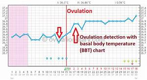 Determining Ovulation By Basal Body Temperature  Works