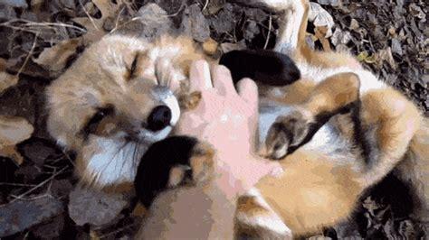 animales  los  les fascina  les rasquen la pancita
