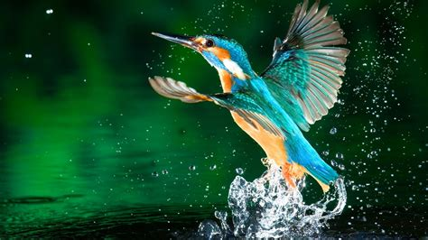 3d Wallpaper Hd 1080p Free For Laptop by Kingfisher Bird Hd Wallpapers Free 1080p In 2019