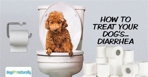 cure dog diarrhea