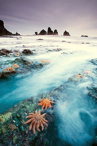 4058 Best Images About Marine Life Under The Sea On