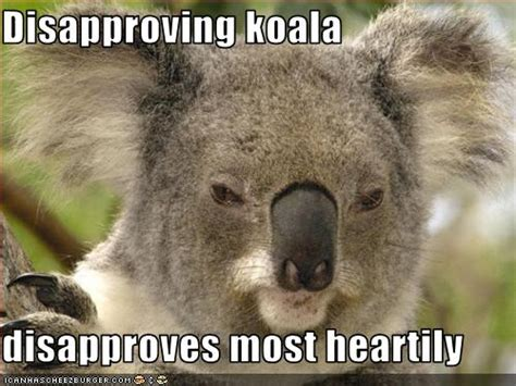 Koala Memes - related keywords suggestions for koala meme