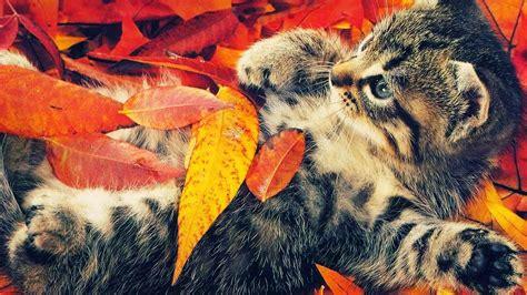 Autumn Animal Wallpaper - autumn animal wallpaper wallpapersafari