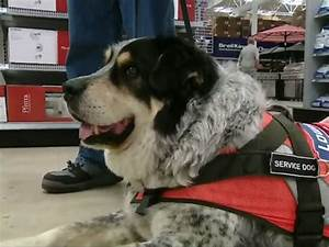 lowes in canada hires man and service dog as package deal With lowes hires service dog