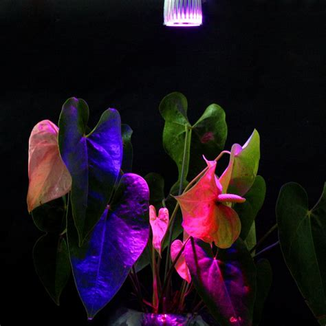 lade a led gu10 e27 gu10 10w led pflanzenleuchte www lumen laden de