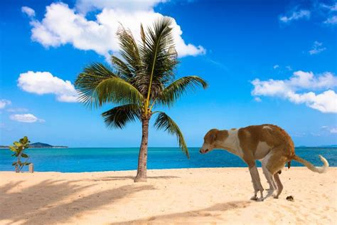 19 Best Funny Zoom Virtual Backgrounds To Use On Your Next ...