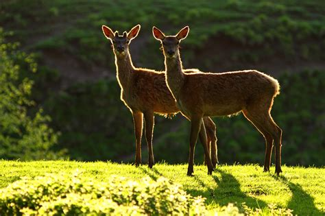 beautiful wildlife photography  simon roy clickscom